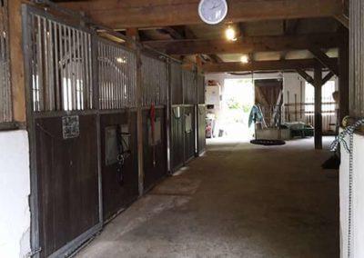 Reiturlaub mit Pferd Hemmoor Wingst Cuxhaven